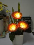 solar power LED African daisy