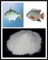 Fish Collagen Protein(FCP)